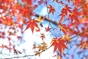 autumn-leaves_00019.jpg.pagespeed.ce.4mFuoSyGOG[1]