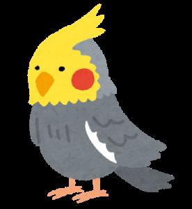 bird_okameinkogray[1]